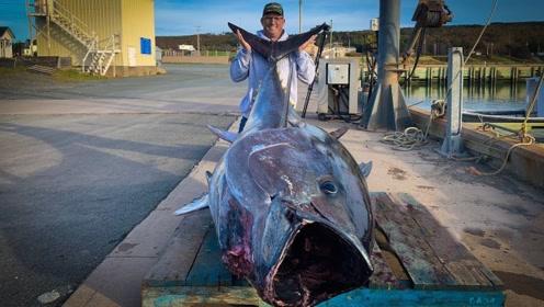 小哥在海里钓到巨型金枪鱼,这个头也太大了吧!