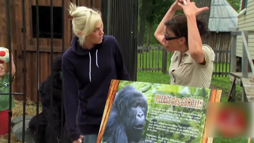 孩子居然和大猩猩玩耍,这下玩的真危险,路人该如何应对呢?