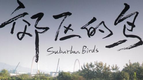 """杭州小伙拍了""""东站故事"""" 称《郊区的鸟》是自己"""