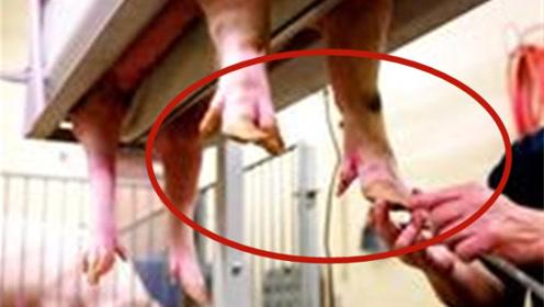 猪的指甲竟如此珍贵?看完这个视频,估计养猪的人都后悔了吧