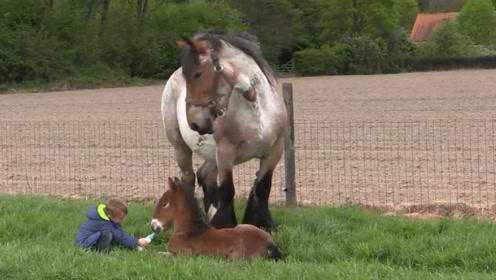 小男孩给小马驹喂奶,站在一旁的马妈妈,下秒的举动简直暖哭!