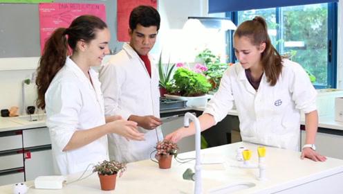 """瑞士最新黑科技,可以""""偷听""""植物讲话,与它们""""互动""""!"""