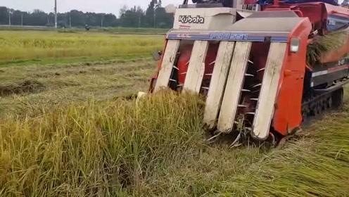 农民机械化收割水稻,不仅效率高还能自动装车,你看有多先进