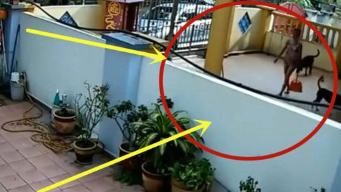富婆在院子里打扫卫生,下一秒竟做出这样的行为,邻居家监控拍下全程!