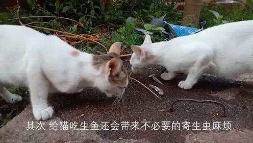 千万别给你家猫咪为生鱼生肉!这样危害很大的!