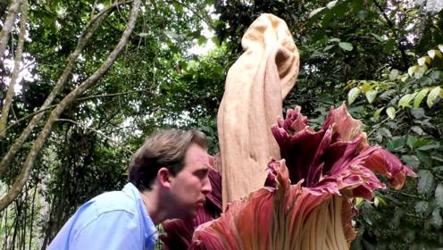 """亚马逊真的有巨型""""食人花"""",直径超过1米,能装下一个胖子"""