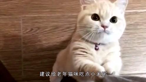 家里猫咪年龄大了,出现了便秘情况,该如何解决这个问题呢?