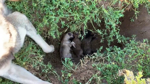 为什么狗狗死后,不能埋起来?正确处理方式,很多主人无法接受!