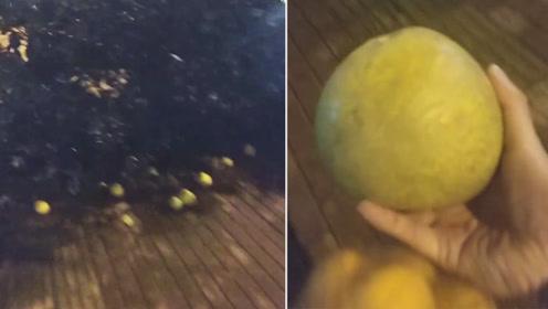 武汉遭大风袭击路边柚子树被连根拔起 市民提塑料袋捡柚子