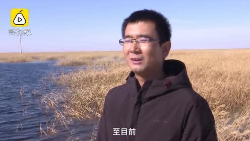 """大漠奇迹!干涸近半世纪,青土湖""""起死回生""""重拾4万亩湖面"""