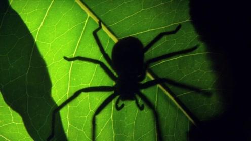 自然界这么多有趣的生物,他竟然喜欢这么可怕的东西!