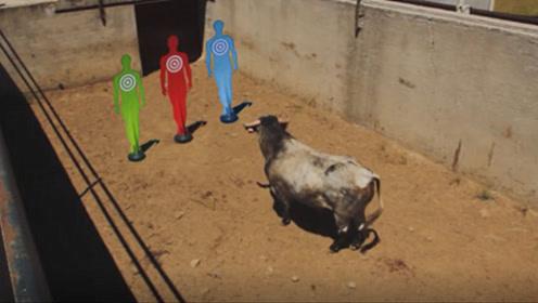 公牛看见红色的衣服就会发疯冲撞?看完牛人的测试,瞬间涨了认知!