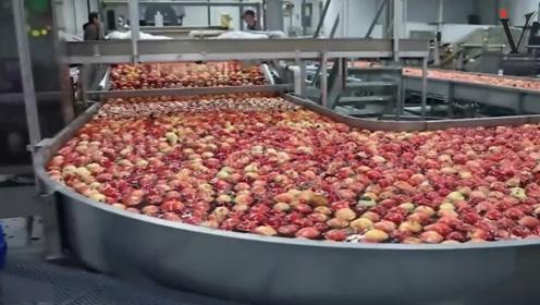 惊人的水果加工厂,机械化水平太先进了!