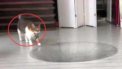 """主人在地上画了个""""大坑"""",本想坑猫咪一把,没想到结局意外了"""