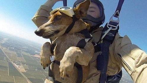 主人带狗狗跳伞,着陆后,狗狗的反应大家憋住别笑!