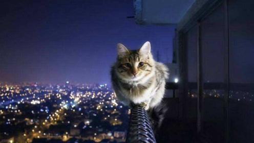 为何自古以来都流传有不能让猫靠近逝者的话?科学家:这并非迷信