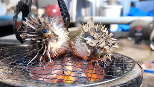日本小伙突发奇想,将刺豚放在烤炉上烤,刺豚都被烫的受不了了