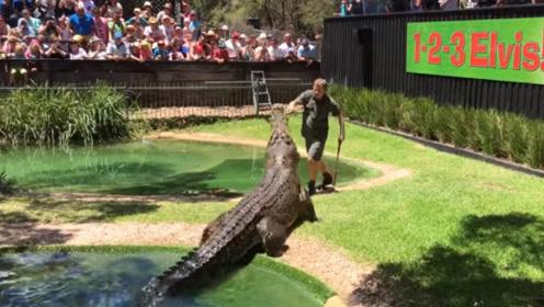 男子伸手挑衅鳄鱼,结果鳄鱼上岸战力爆表,速度快到看不清