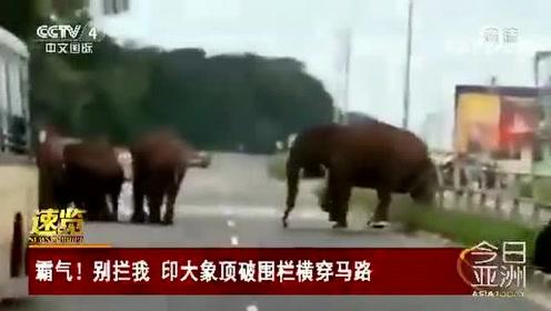 霸气!别拦我 印大象顶破围栏横穿马路