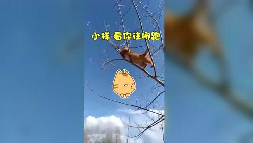 爬树抓老鼠 现在还有这门手艺的猫不多了!!