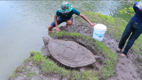 男子河边挖一只乌龟捕鱼,10分钟后扒开龟壳一看,赚大发了!