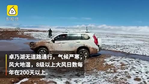 """可可西里""""藏羚羊大产房""""卓乃湖通网,明年可直播藏羚羊产仔"""