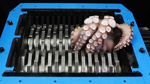 把章鱼放进搅碎机里,猜猜章鱼能撑几秒?镜头记录全过程