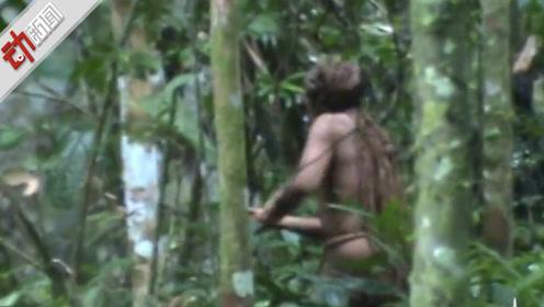 """巴西亚马逊丛林现""""种族中最后一人"""":独自砍树 22年未被发现"""