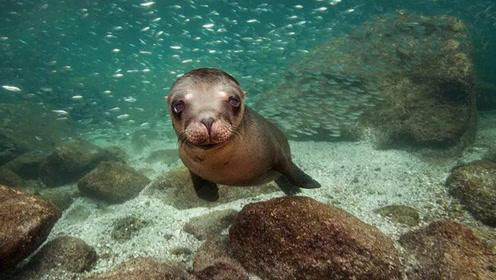 巨大海狮坐鱼市等打赏 耐心礼貌萌翻网友