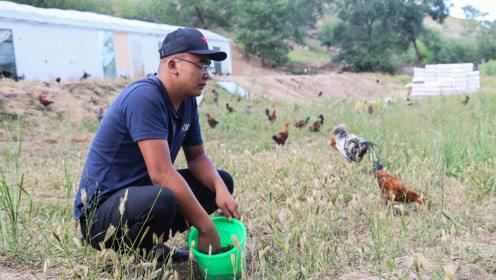 90后村长带领村民养鸡致富 结果反被全村责怪