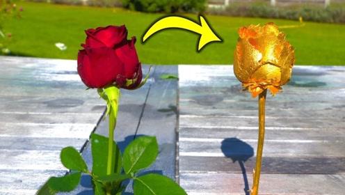 金色玫瑰花是怎么培育出来的?见证奇迹的时刻开始了!