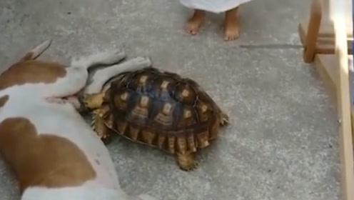 乌龟趁狗狗睡觉报仇,一口咬住重要部位,下一秒狗子反映亮了!