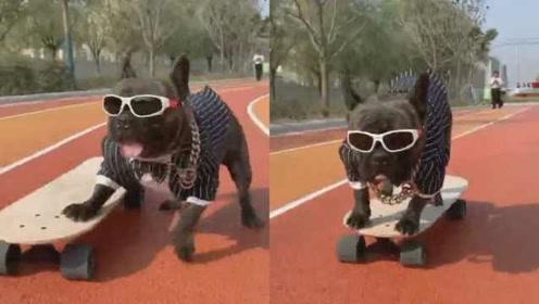 人不如狗!斗牛犬玩滑板溜到飞起,戴着金链子拐弯避障