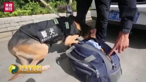 """坚守在缉毒战场的""""缉毒兵王"""" 在汽车脚踏板下发现价值2、3百万元的毒品"""