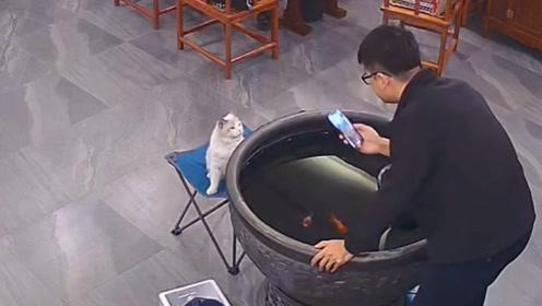 猫:光看有什么意思,看我给你来个狠的