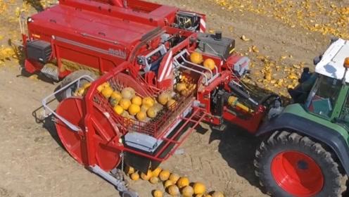 这农业机械太牛了,从南瓜里取籽不仅简单效率还高