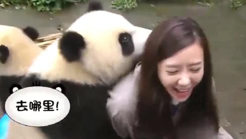 熊猫宝宝一把抱住美女姐姐,抓着衣领往下拽,网友:眼光不错!