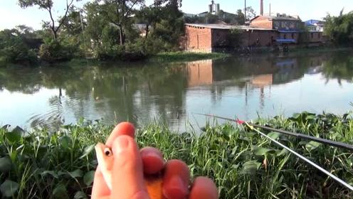 野河钓白条鱼,拉饵一直抽,双飞上鱼的节奏