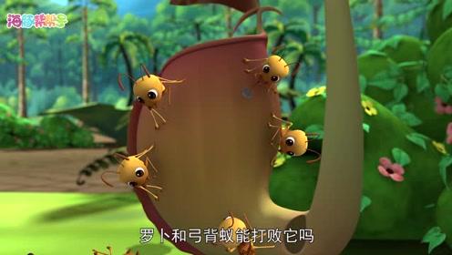 预告片-蚂蚁和猪笼草
