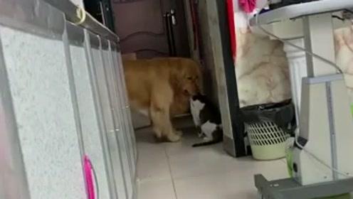 刚说了一句今晚吃猫肉,下一秒狗狗就开始行动了,狗子你是来搞笑的吗?