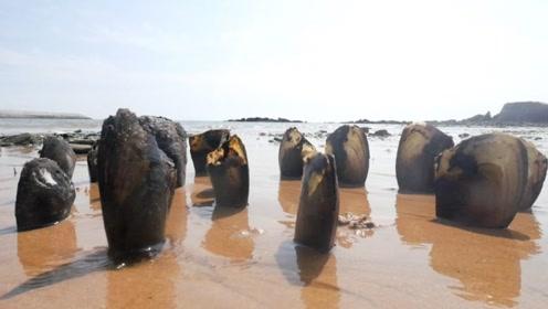 台风过后海边出现怪异现象,女子赶来一看,却高兴坏了!