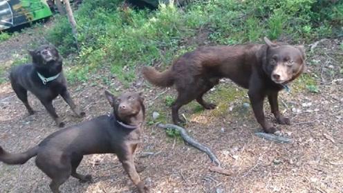 """狗狗:可以动了吗?我快石化了!这3只""""雕塑""""狗彻底火了!"""