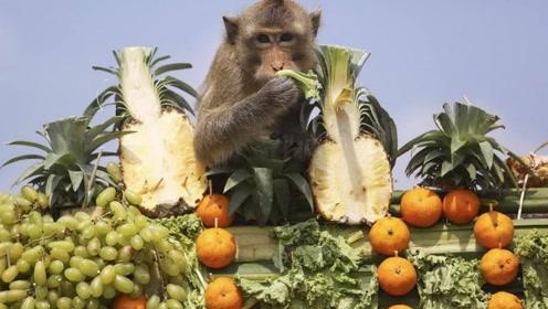 泰国猴子宴,请2000多只猴子吃自助餐,消耗水果1000斤