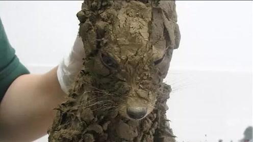 """国外小伙在泥坑捡到一条""""狗"""",洗干净后吓一跳:这是什么东西?"""
