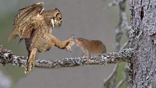 谁说猫头鹰一定招人烦,看老外捡来的这个猫头鹰,别提多有灵气