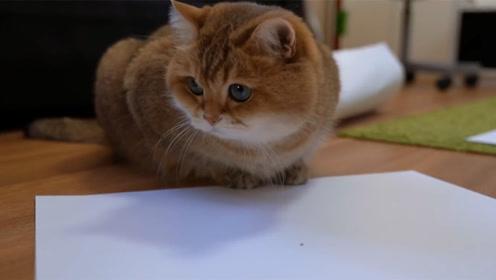 中国人什么都吃,为何就是不吃猫肉,看完真是长知识了!