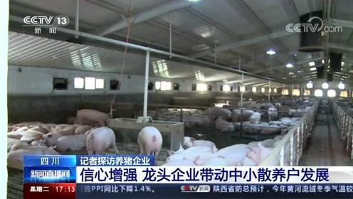 【四 川 记者探访养猪企业】信心增强 龙头企业带动中小散养户发展