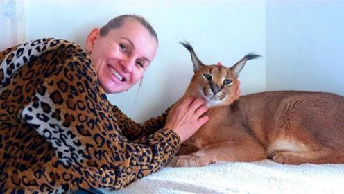 女子山里捡了一只宠物猫,半年后性格大变!饿了连狼也敢吃!
