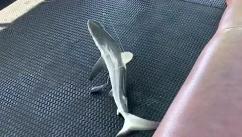 一个船钓到3条鲨鱼,正好是一群小鲨鱼游过,大哥真幸运!