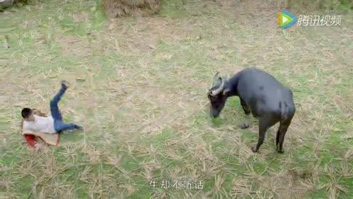 一个发生在神秘侗寨的故事:寻牛记